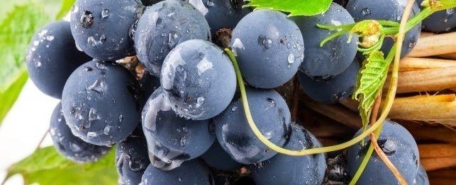 Sono uva e uvetta veramente tossica per i cani?