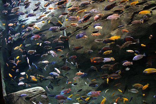 Il pesce più incredibile del mondo