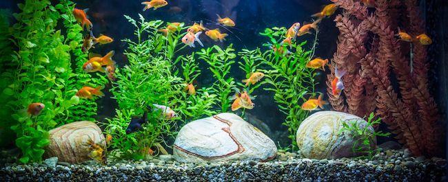 acquario d`acqua dolce Ttropical con i pesci