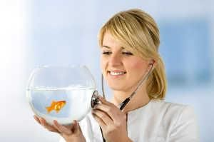 Malattie Goldfish da sintomi