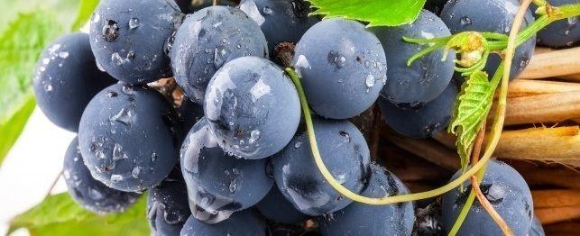 Uva e uva passa tossicosi nei cani