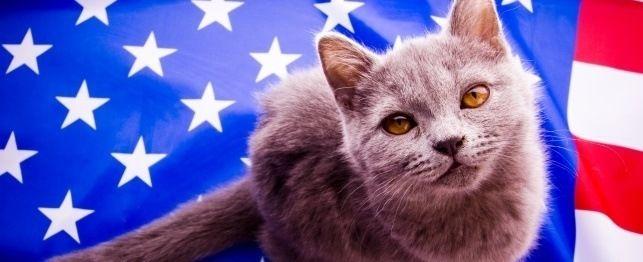 Grandi nomi per i gatti patriottici