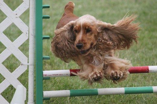 Il vostro cane deve rimanere filaria libero e in grado di fare tutto!