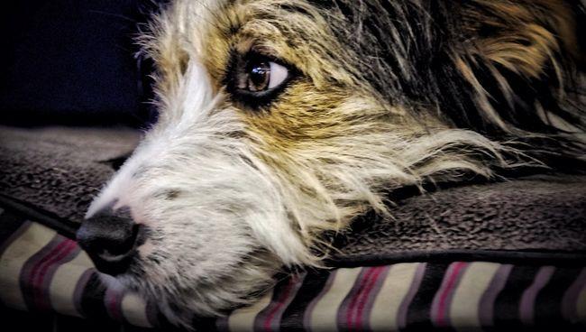 Cane che si trova sul letto