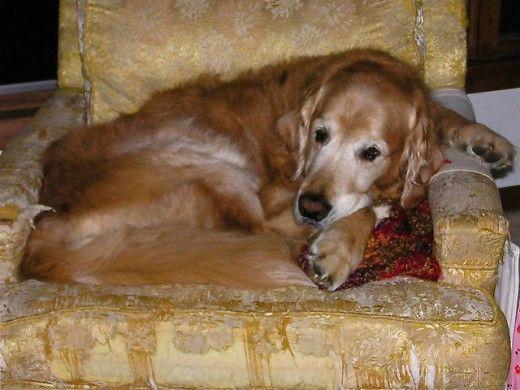 I cani vivono più a lungo, quindi il cancro è più comune.