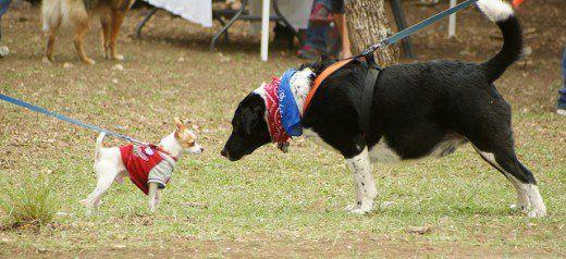 Il cancro può colpire cani di tutte le taglie.