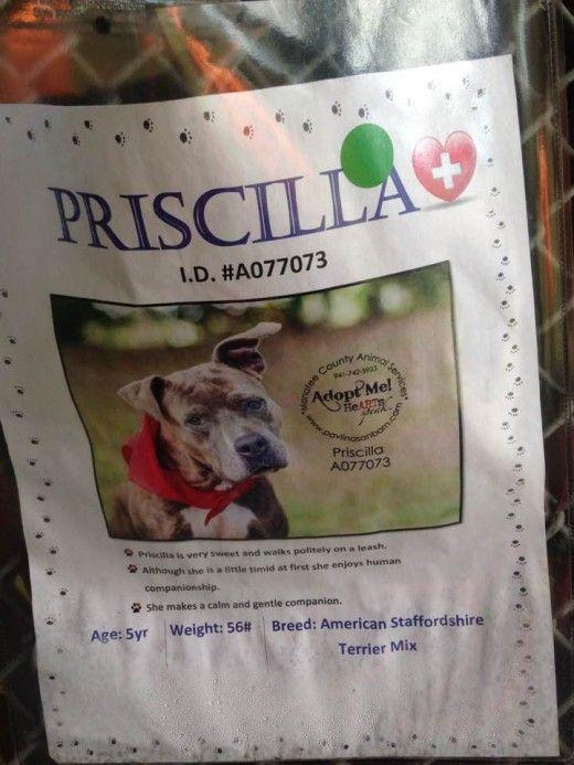 Priscilla è uno dei beneficiari del trattamento filaria e un residente della Filaria hotel