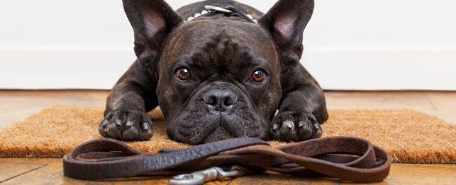Sedersi! Restare! Leggere! I nostri 5 strumenti di formazione preferita per i cani