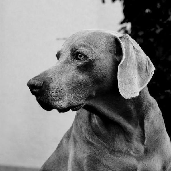 Tumori della pelle sui cani