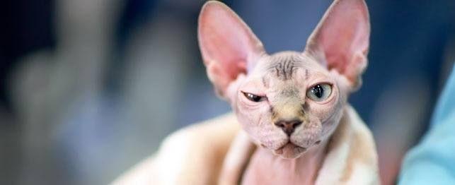 Il magro su condizioni di pelle di gatto