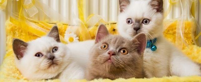 La guida definitiva per chiamare il vostro gatto o gattino