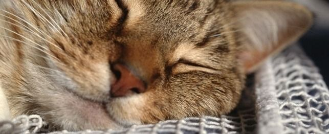 Top 20 sintomi gatto che li inviano al veterinario