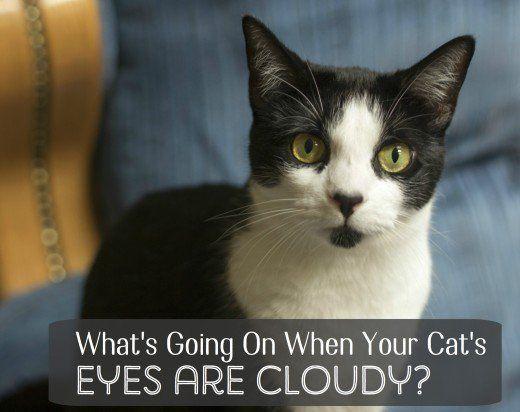 Disturbi che possono causare nuvolosità occhio includono cheratite, glaucoma e cataratta.