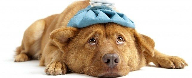 Che cosa si dovrebbe sapere su assicurazione salute del cane